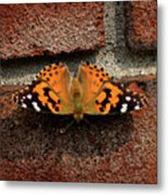 Skipper Warming In The Morning Sun Metal Print