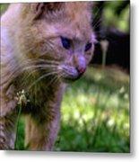Skippy Feral Cat Portrait 0369b Metal Print