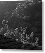 Skn 6707 Tree Parade. B/w Metal Print