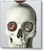 Skull And Bird Metal Print