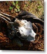 Skull And Horseshoes Metal Print