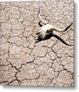 Skull In Desert 2 Metal Print by Kelley King