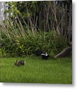 Skunk And Rabbit Surprise Metal Print