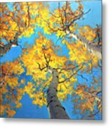 Sky High Aspen Trees Metal Print