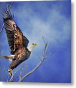 Skyward - Bald Eagle Metal Print