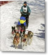 Sled Dogs In Action Metal Print