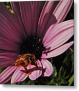 Sleek Bee Metal Print