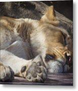 Sleeping Beauty,  Houston Zoo Metal Print