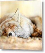 Sleeping Beauty -red Fox In Rest Metal Print