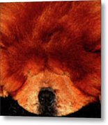 Sleeping Chow Chow Metal Print