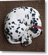 Sleeping Dalmatian II Metal Print