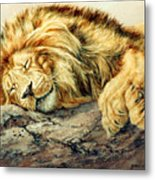 Sleeping Lion Metal Print