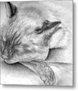 Sleeping Siamese Metal Print