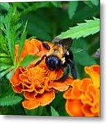 Sleepy Bumblebee Metal Print
