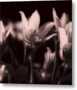 Sleepy Flowers 2 Metal Print