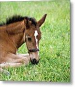 Sleepy Foal Metal Print
