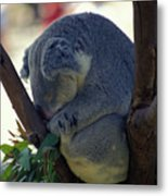 Sleepy Koala Bear Metal Print