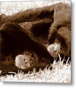 Sleepy Monkeys Metal Print