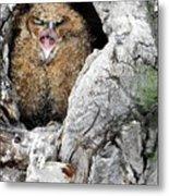 Sleepy Owlet Metal Print