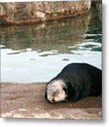 Sleepy Sea Otter Metal Print