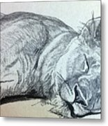 Slepping Lion Metal Print