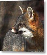 Sly As A Fox Metal Print