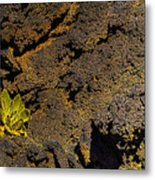 Small Aloe In Lava Flow Metal Print