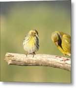 Small And Large Metal Print