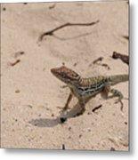 Small Brown Lizard Sitting On A White Sand Beach Metal Print