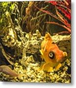Small Fish In An Aquarium Metal Print