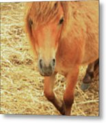 Small Horse Large Beauty Metal Print