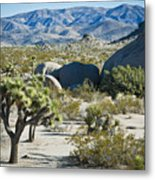 Small Joshua Tree Metal Print