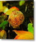 Small Mushroom In Autumn Metal Print