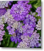 Small Pink Flowers 10 Metal Print