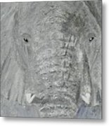 Small Tusks Metal Print