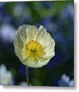 Small White Poppy Metal Print