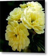 Small Yellow Roses Metal Print