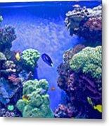 Smaller Fish In Monterey Aquarium-california  Metal Print