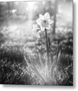 Smell Of The March Metal Print