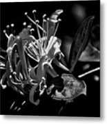Smell That Honeysuckle Metal Print