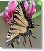 Smelling The Asiatic Lilies Metal Print