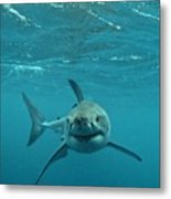 Smiley Shark Metal Print