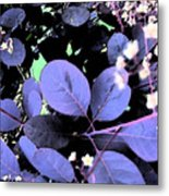 Smoke Tree Blues Metal Print