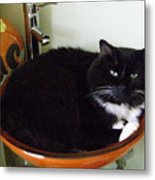 Smokey In Wash Bowl Metal Print