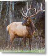 Smoky Mountain Elk II - North Carolina's Cataloochee Valley Wildlife Metal Print