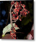 Smooth Sumac Flower Metal Print