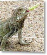 Snacking Iguana On A Concrete Walk Way Metal Print