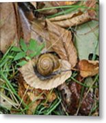 Snail At Home Metal Print