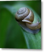 Snail In The Morning Metal Print