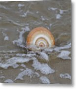 Snail In The Surf Metal Print